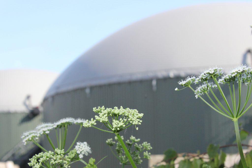biogasanlage im Hintergrund